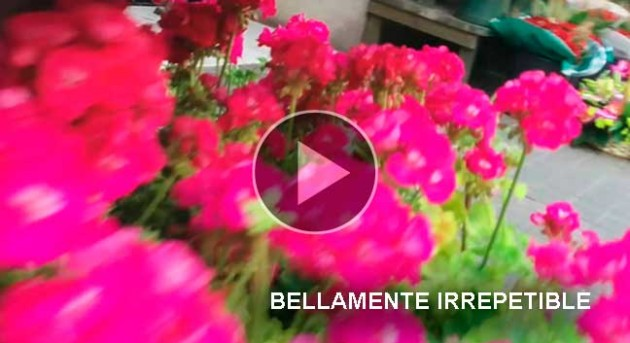 https://hoja.claraesperanza.net/wp-content/uploads/2018/04/portada_slider_bellamente_2-80x65.jpg